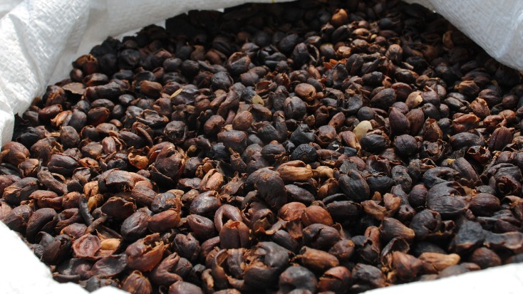 Inside the World's Most Advanced Coffee Laboratory
