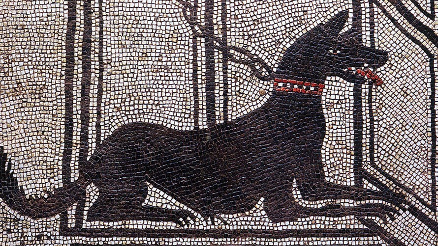 There's Human History Hiding in Ancient Dog Remains