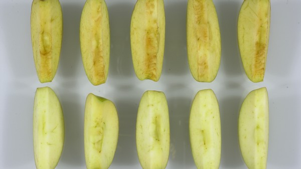 Turn Brown for What? The USDA Has Approved Genetically-Modified Evergreen Apples