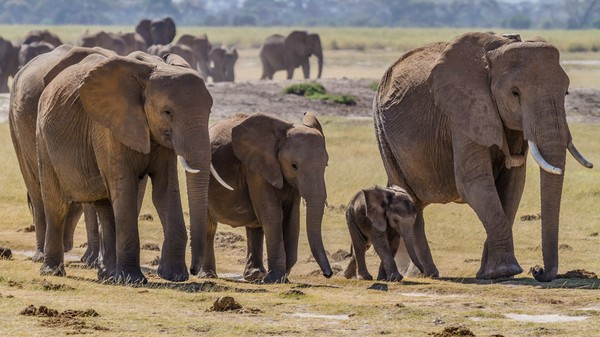 The Science of Busting Illegal Ivory