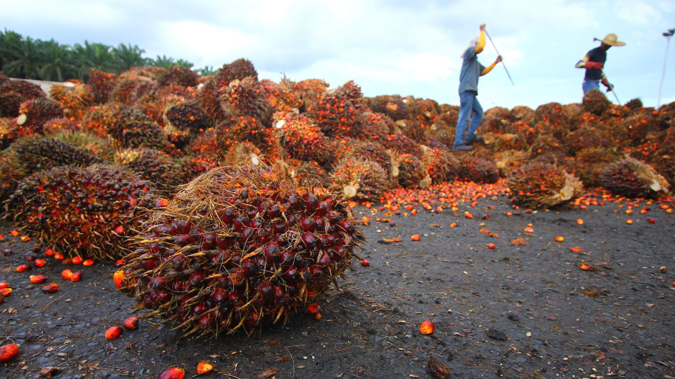 The Race for Sustainable Palm Oil