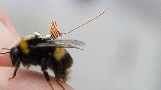 Tiny Tracking Chips Will Help Us Understand Why Bees Are Dying