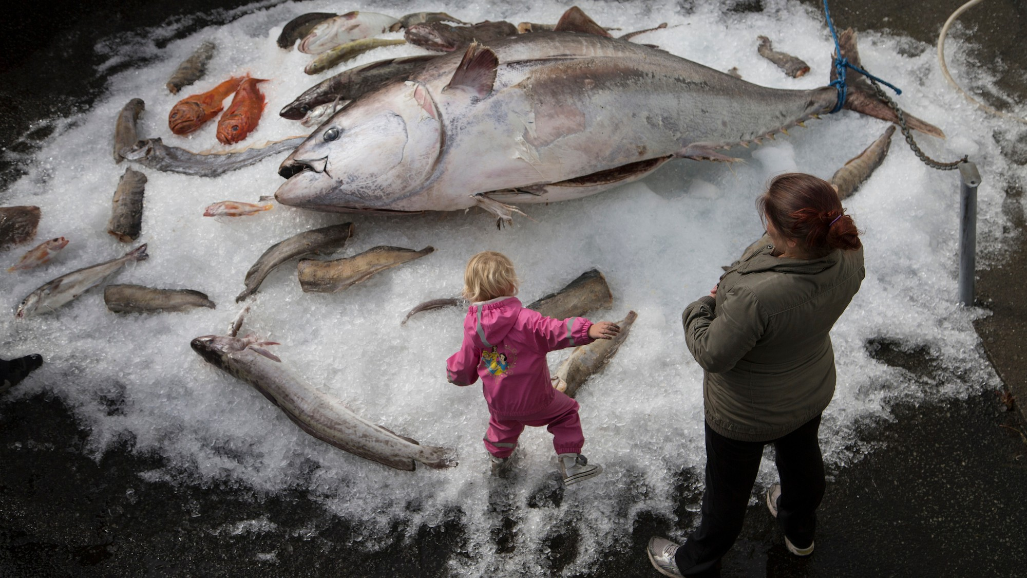 In Photos: The Faroe Islands' Controversial Whale Hunt