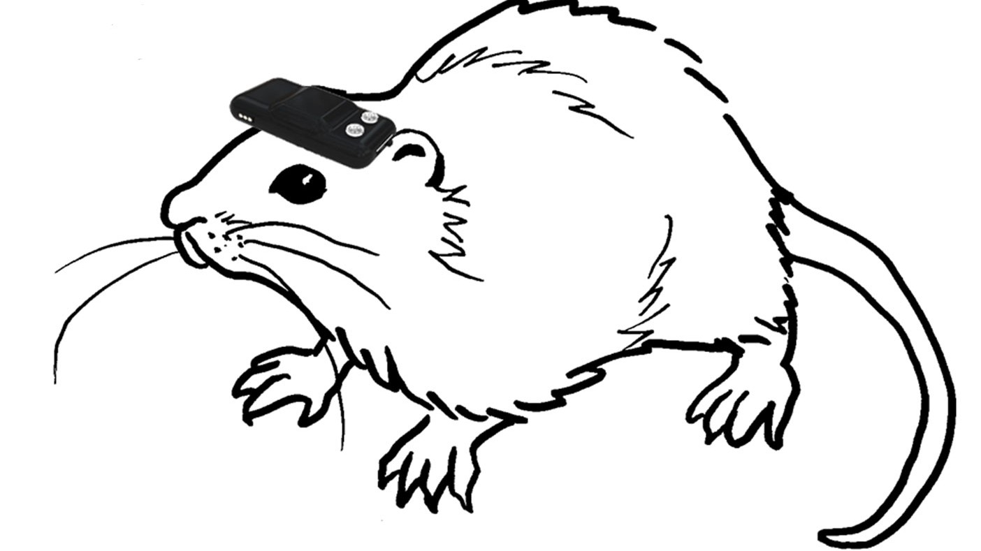 This Brain Implant Gives Blind Rats a Compass-Like Sense of Direction