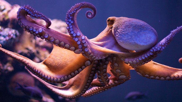 How Octopuses Move So Weirdly