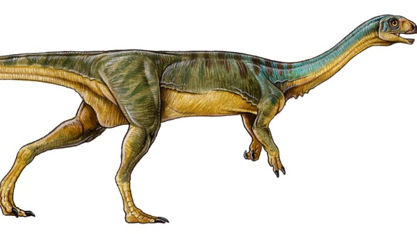 A 7-Year-Old Boy Discovered T-Rex's Vegetarian Cousin