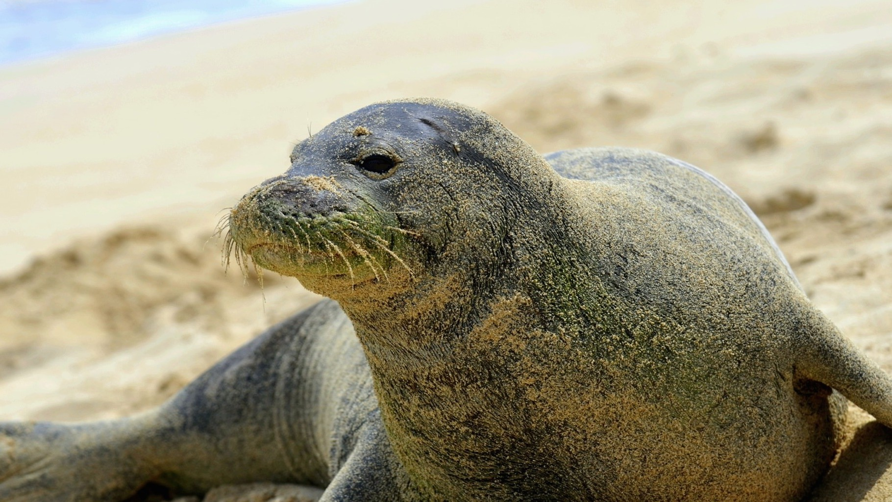 How Two Monk Seals Are Trying to Save Their Species from Extinction