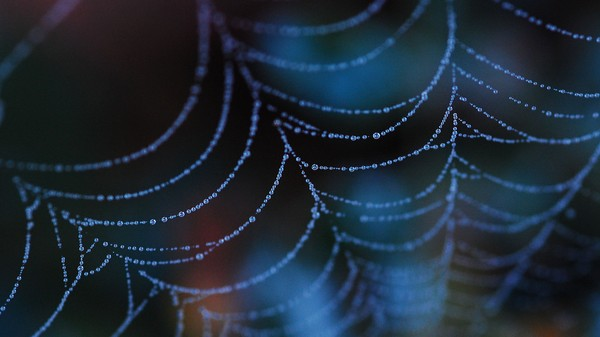 Spiders Spin Super Silk After Being Spritzed with Graphene