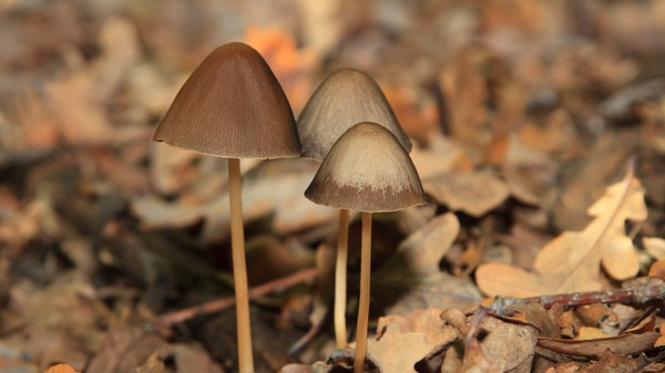 A UK Psychiatrist Is Calling for Psychedelic Drugs to Be Reclassified