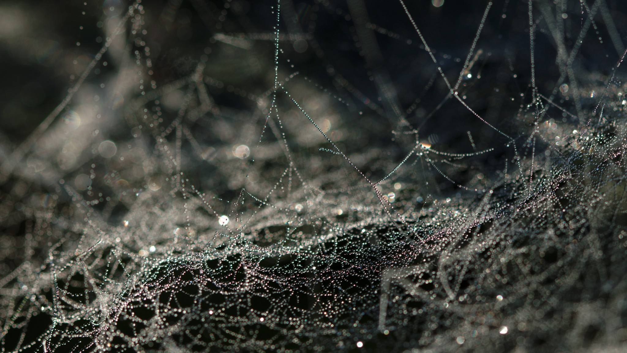 ​Scientists Made Spider Silk Without Any Spiders