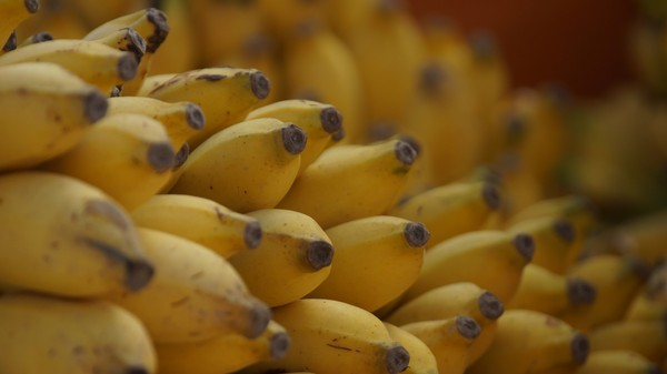 A Deadly Fungus Is Killing All Our Bananas