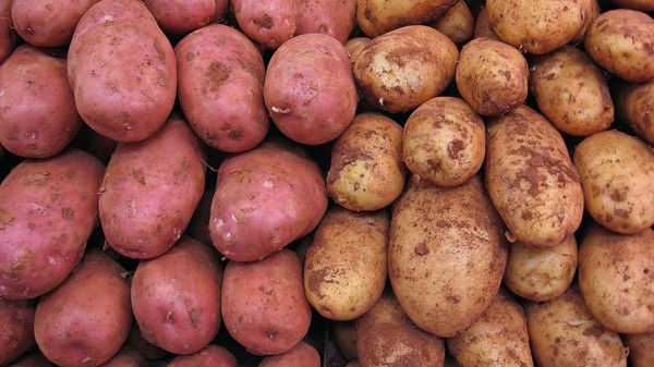 Here Comes the Genetically Modified, Disease-Resilient Super Spud