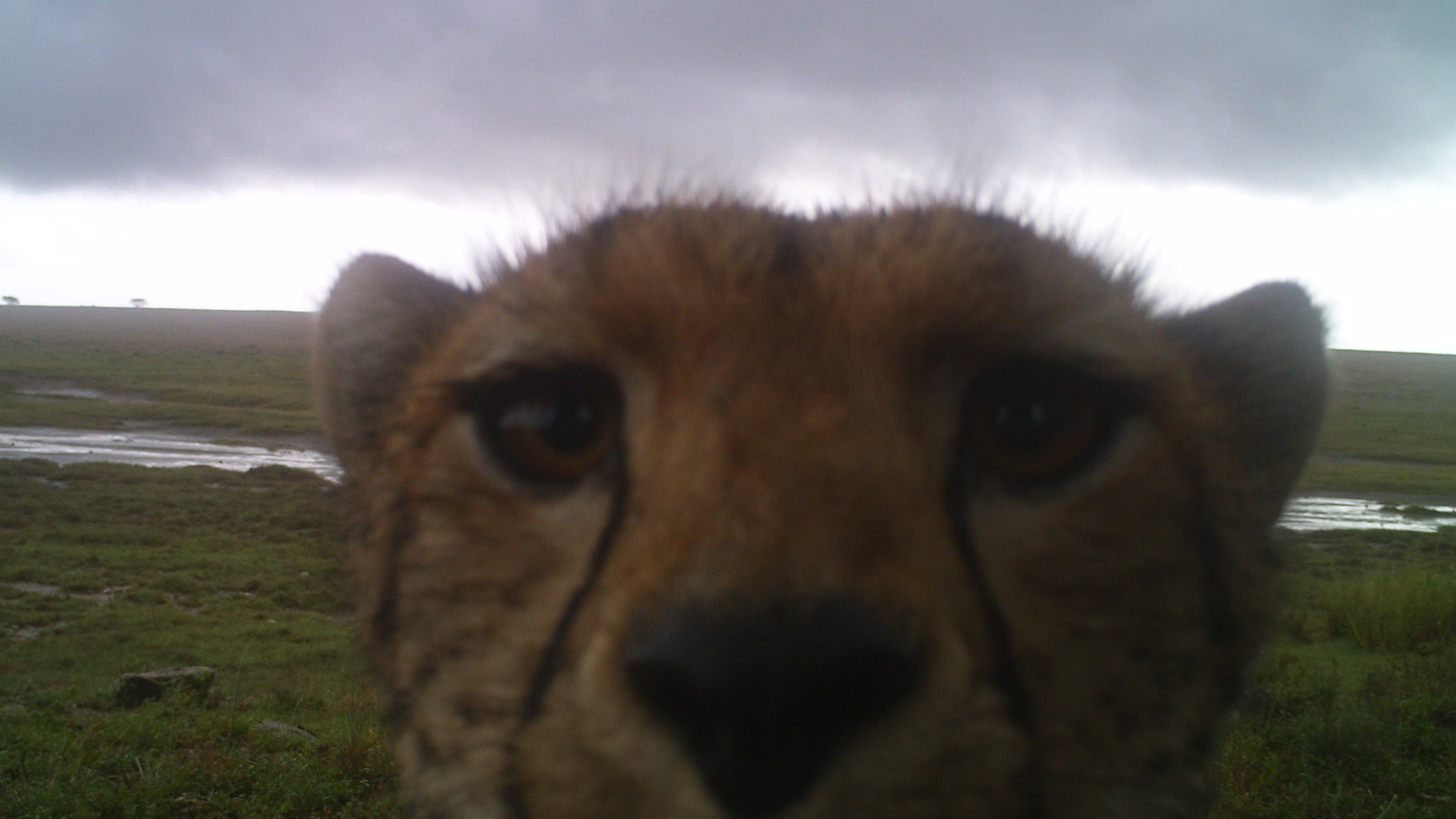 Ecologists Are Using Over 300,000 Animal Selfies to Study the Serengeti