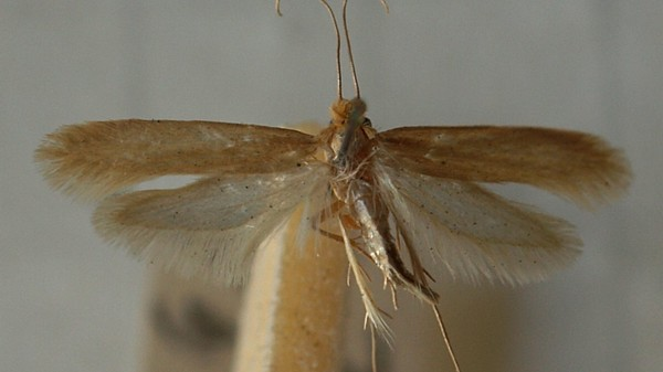 Museum Workers Are Making Male Moths Fall for Each Other to Save Their Exhibits
