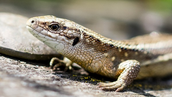 Lizard Squad Hacker Who Swatted and Terrorized Gamers Is Back in Court Next Week