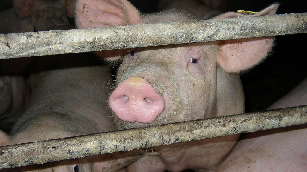 An Investment Banker's Solution to Factory Farming