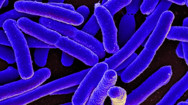 Researchers Love E. Coli Because They Can Make It Poop Plastic