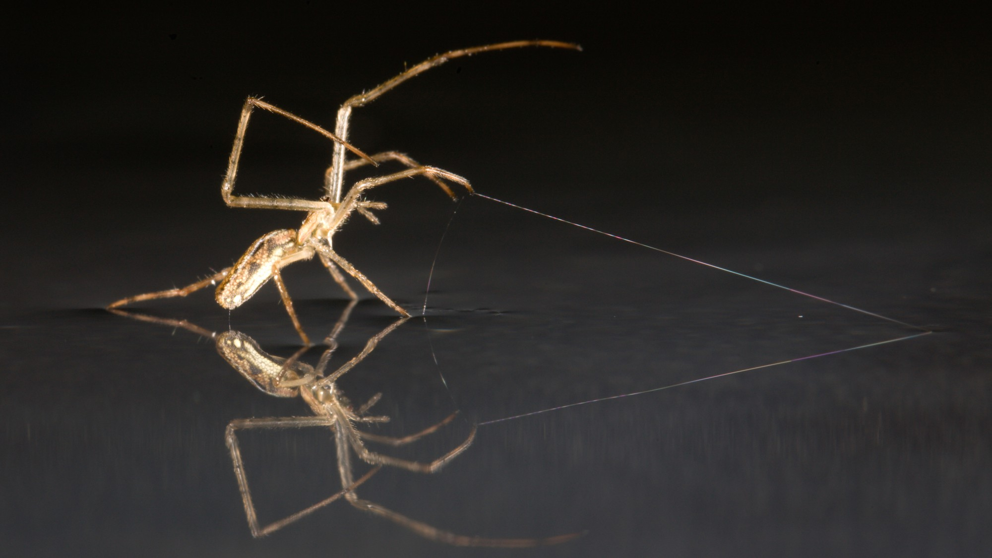 How Spiders Can Cruise Across Water