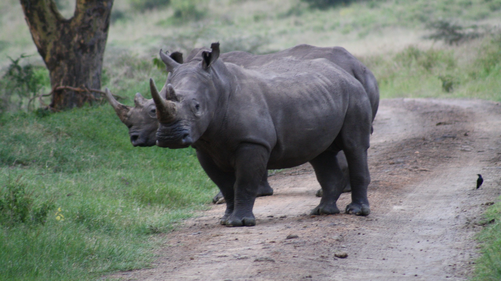 Rhino Horn Cams? If Only Stopping Poachers Were That Easy
