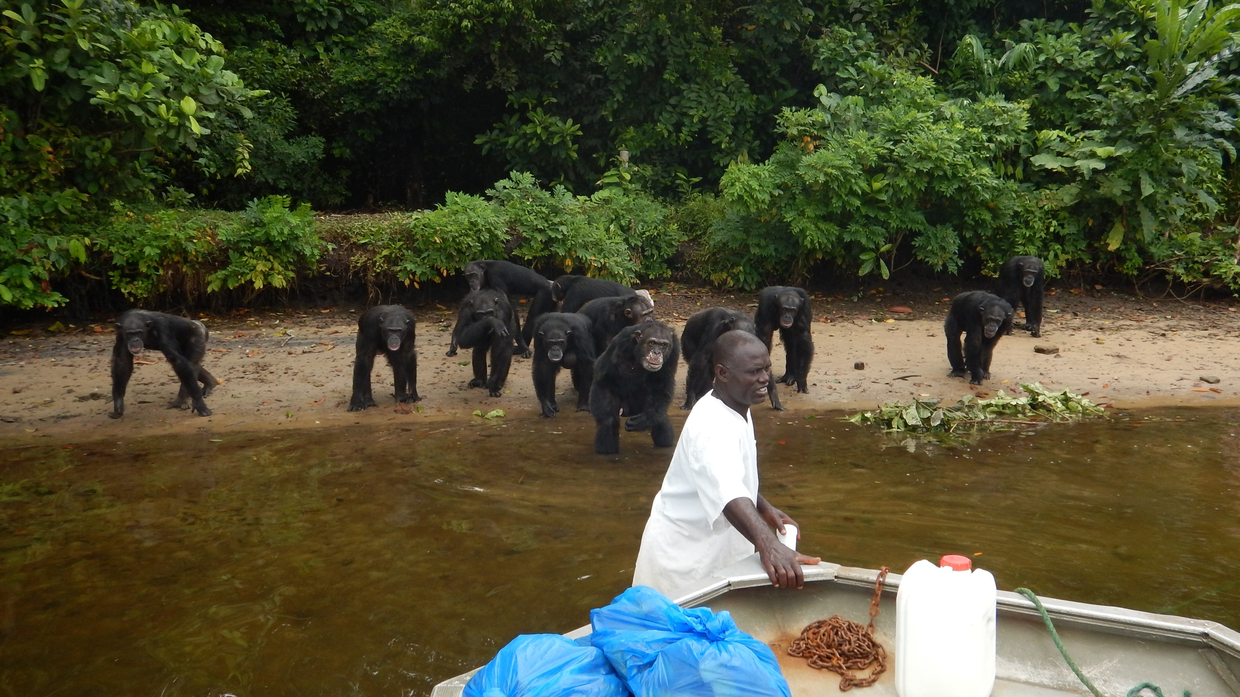 $150,000 Raised for Abandoned Research Chimps, But Will Only Last Six Months