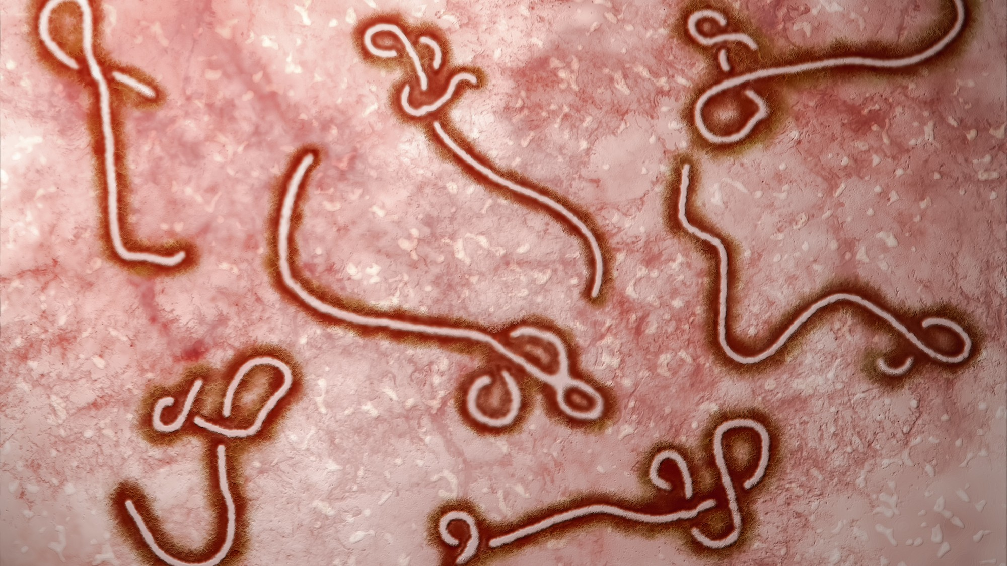 An Ebola Vaccine Is Showing Up to 100 Percent Efficacy So Far