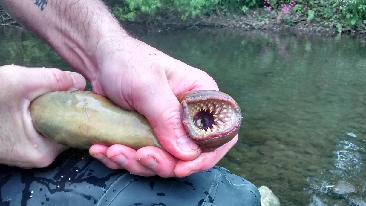 This Horrific-Looking Prehistoric Water Monster Has Returned to England's Rivers