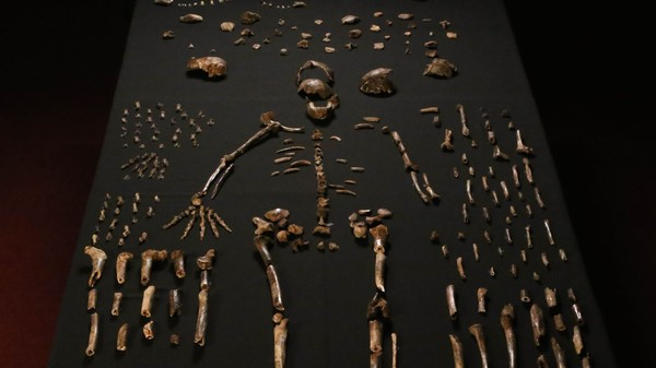 'Homo Naledi': A New Human-Like Species Could Change Our Ideas on Evolution