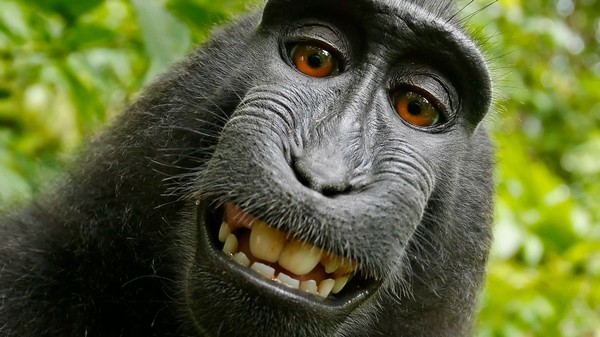 PETA Sues Photographer on Behalf of Selfie-Taking Monkey