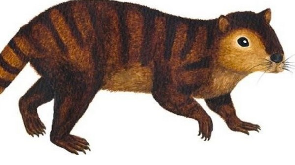 The Badass Beaver-Like Mammal That Outlived the Dinosaurs