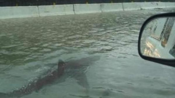 'Shark Swims Down a Flooded Street' Is a Viral Hoax That Won't Die