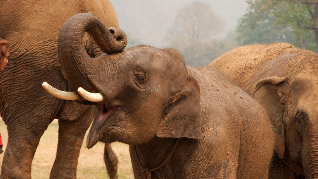 Geneticists Found the 'Master Tumor Suppressor' That Stops Cancer in Elephants