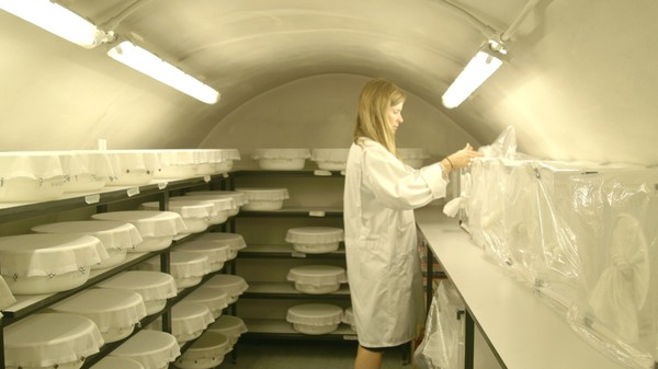 ​Inside London's Underground Mosquito Lab