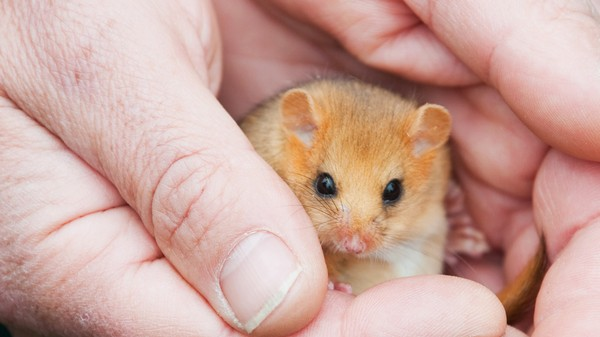 ​A New Type of Wildlife Sky Bridge is Being Tested on the UK's Rare Dormouse