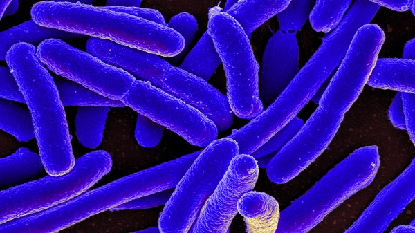 Leading Antibiotic Doomsayer Mellows on Infection Armageddon