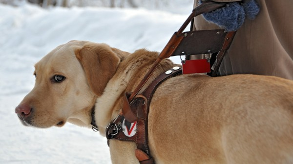 Guide Dogs Are Trained Not to Complain, So This Health Monitor Does It for Them