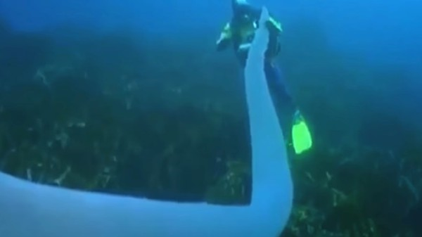 Giant Glowing Tubes Called Pyrosomes Are Some of the Ocean's Strangest Creatures