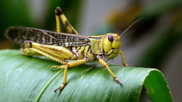 How to Stop a Plague of Locusts