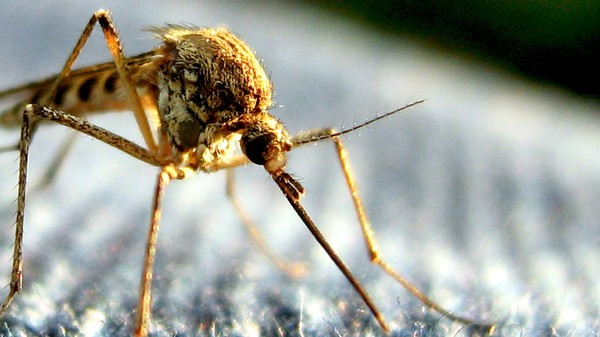 Why Eradicating Earth's Mosquitoes To Fight Disease Is Probably a Bad Idea