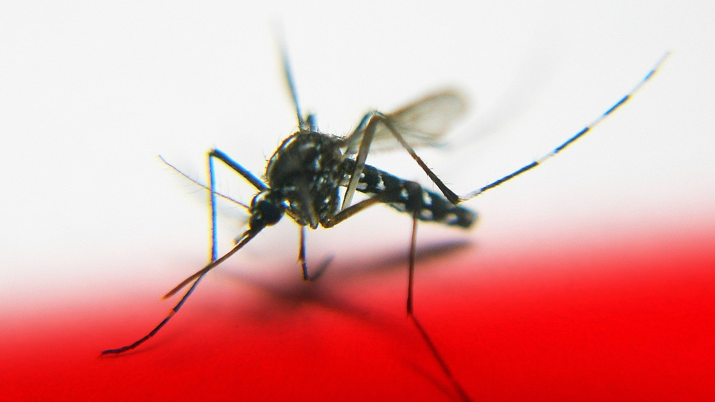 Instead of Killing Mosquitoes, Why Don't We Edit the Viruses Out of Them?