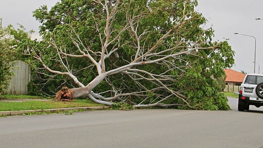 The Physics of a Wind-Shattered Tree
