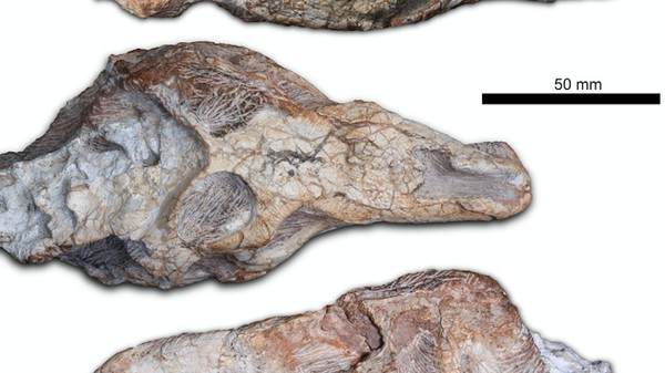 This 'Fierce Lizard' Fossil Is a Missing Link Between Dinos and Their Ancestors