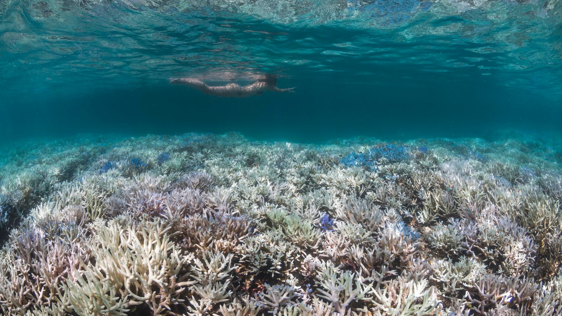 'Worst Bleaching Ever' Observed on the Great Barrier Reef