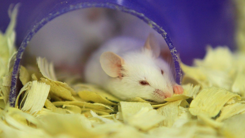 Space-Faring Mice Return to Earth with Liver Damage