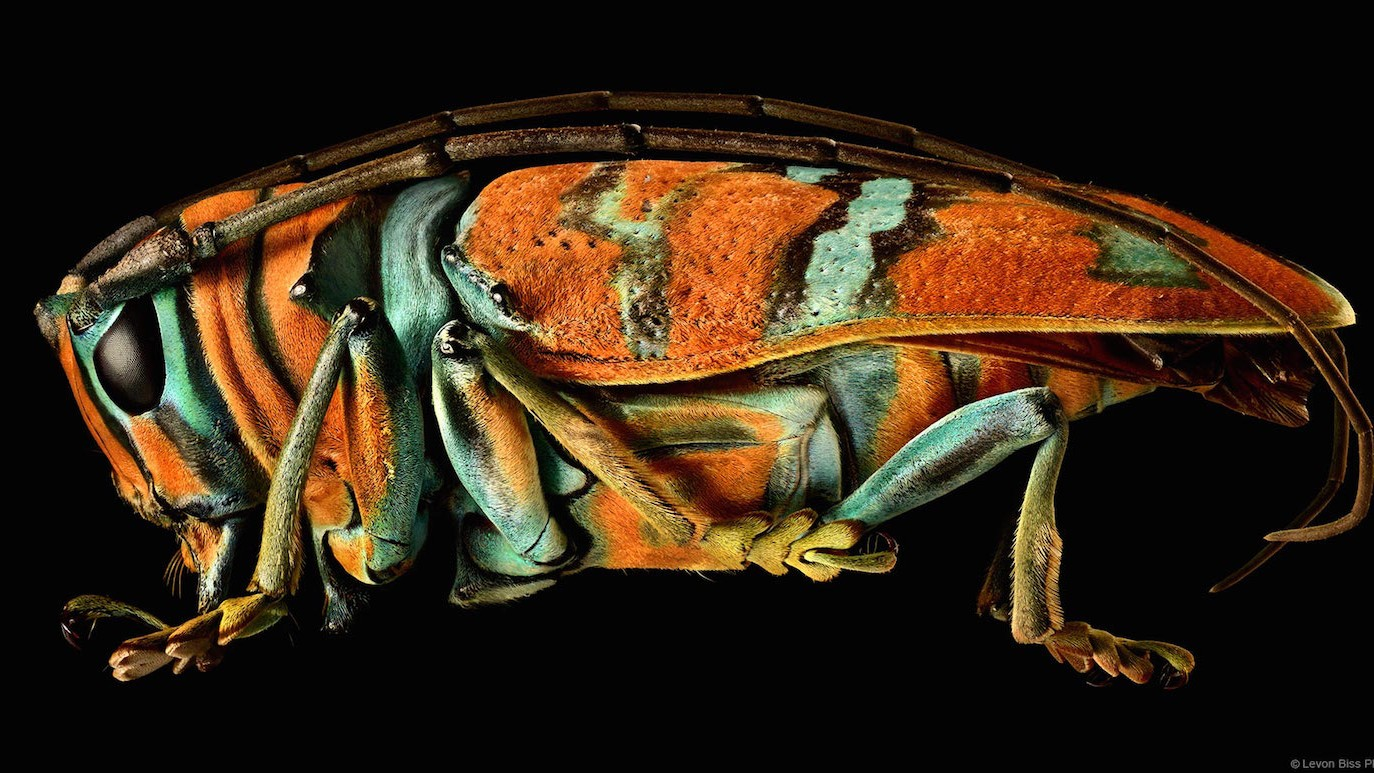 Each of These Alien-Like Insects Was Created from Over 8,000 Photographs