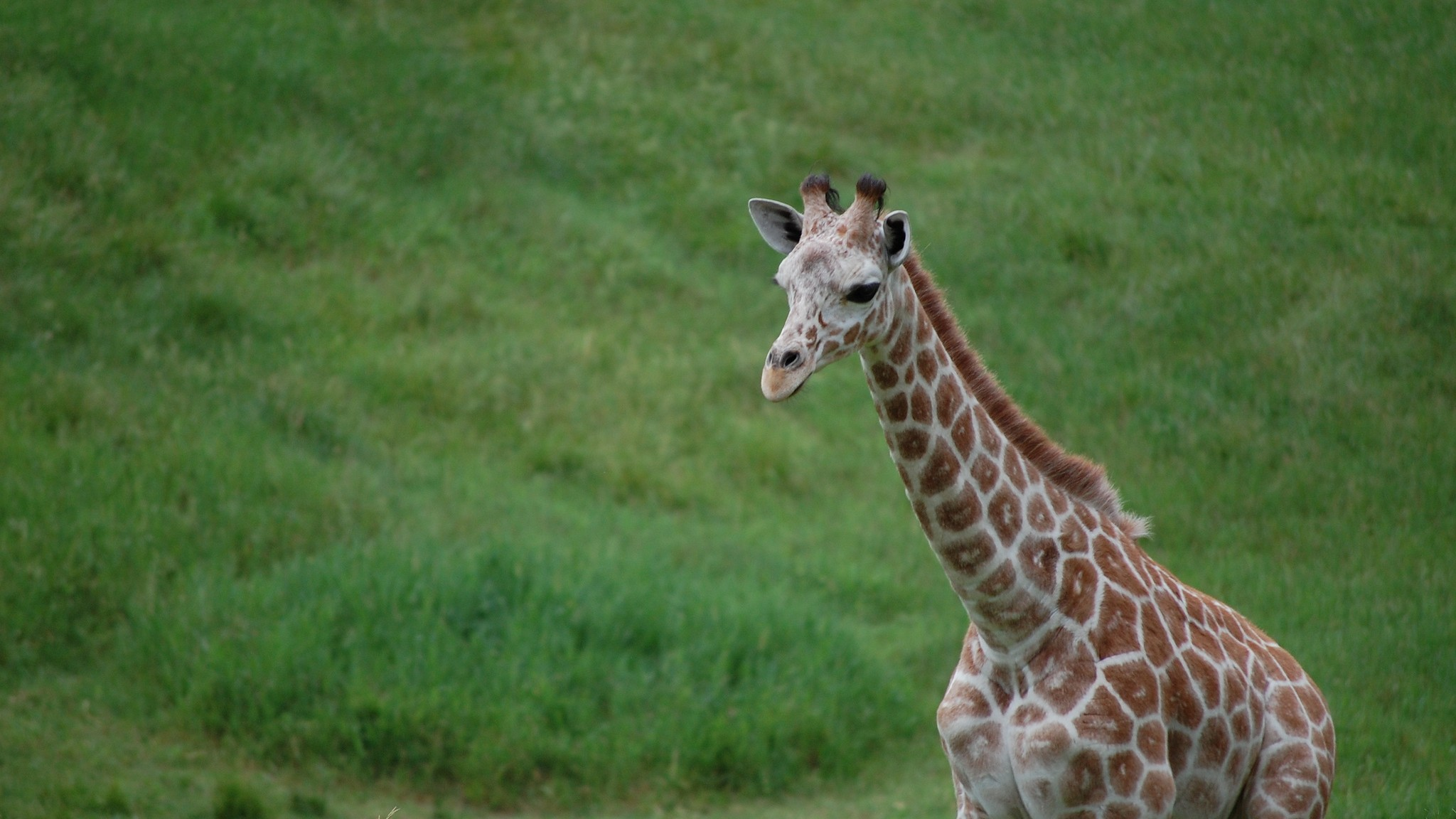 New Research Helps Explain Why Giraffes Have Such Long Necks