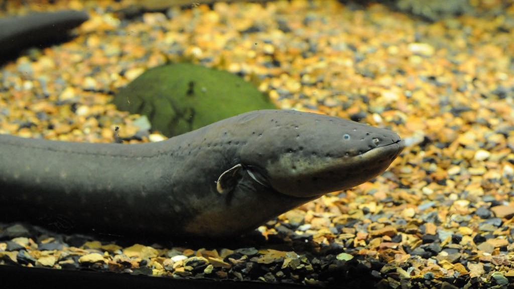 Jumping Electric Eels Will Fuck You Up