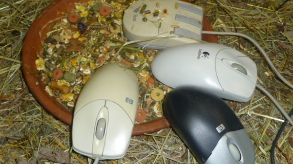 CERN Has an Actual, Literal 'Animal Shelter' for Computer Mice