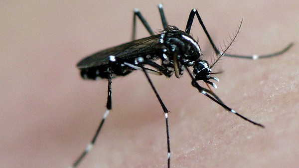This App Helps Citizens Report Deadly Mosquito Sightings