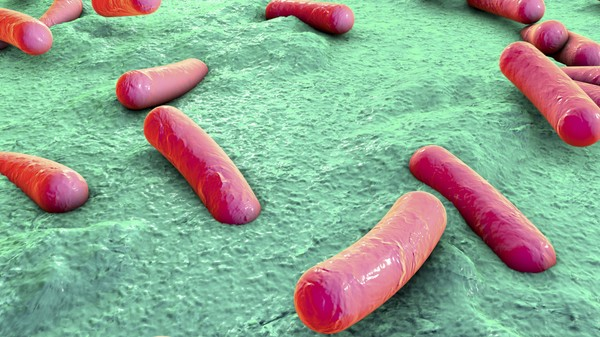 Why Antibiotics Cause Diarrhea