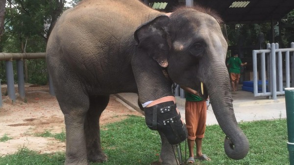 Meet the Man Making Giant Prosthetics for Elephants